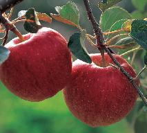 Co można zrobić z jabłek? Jakie przetwory z jabłek?